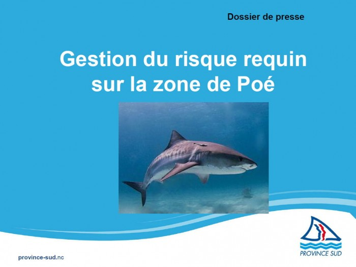 Gestion risque requin